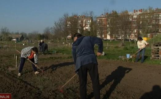 Hrvatski apsurdi: Urbane vrtove za siromašne u Osijeku nema tko obrađivati