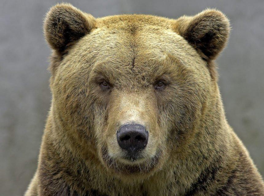 Europski  parlamentarci napali  Hrvatsku zbog Macole: On drži medvjede u zatočeništvu